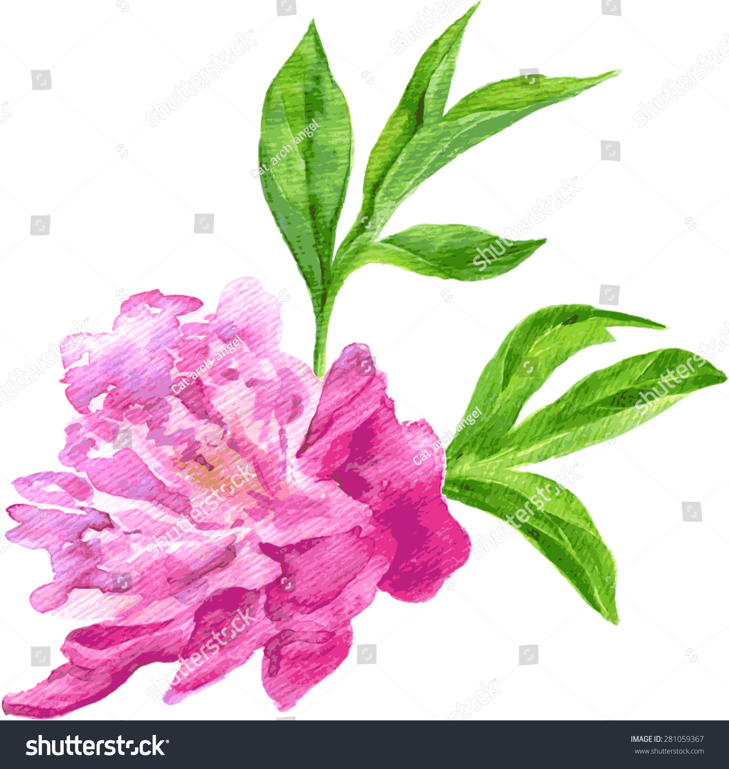 向量水彩粉色牡丹花朵和绿叶,手绘水彩画矢量插图