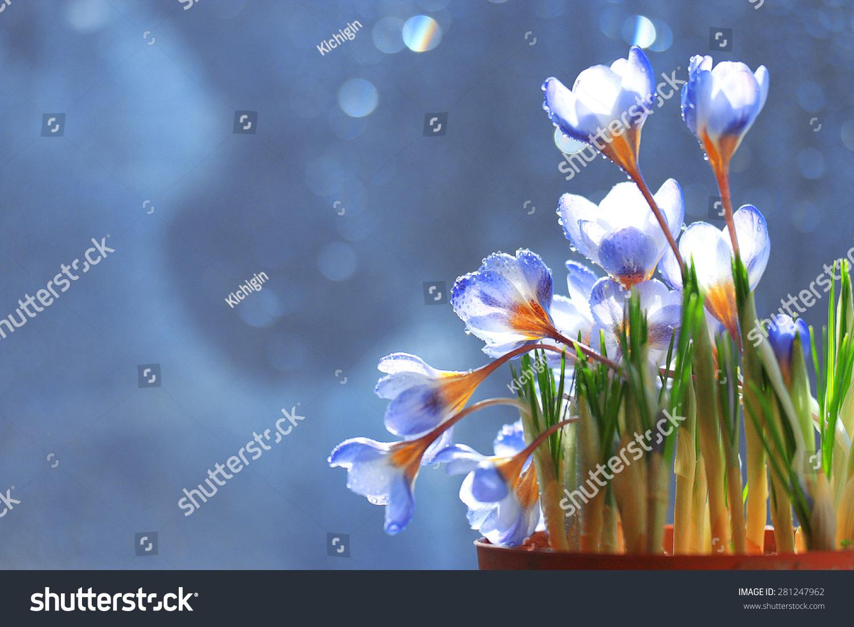 温柔的春天的花朵-自然-海洛创意(hellorf)-中国独家