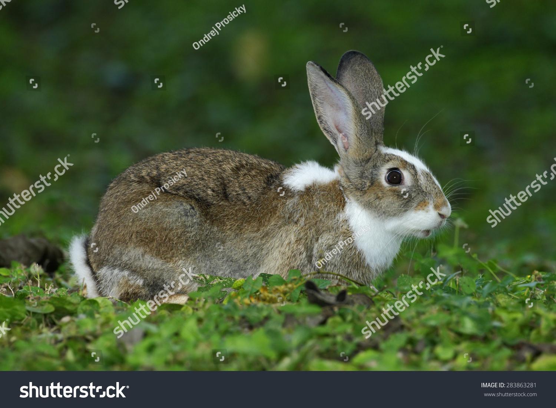 小兔子用日志的耳朵坐在自然栖息地