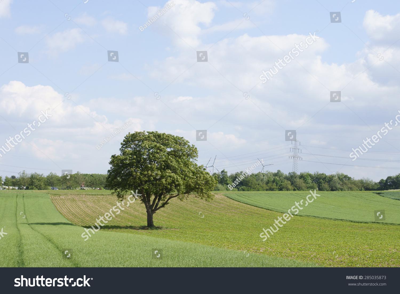 一棵树站在一个新的郊区玉米地里/树在球场上