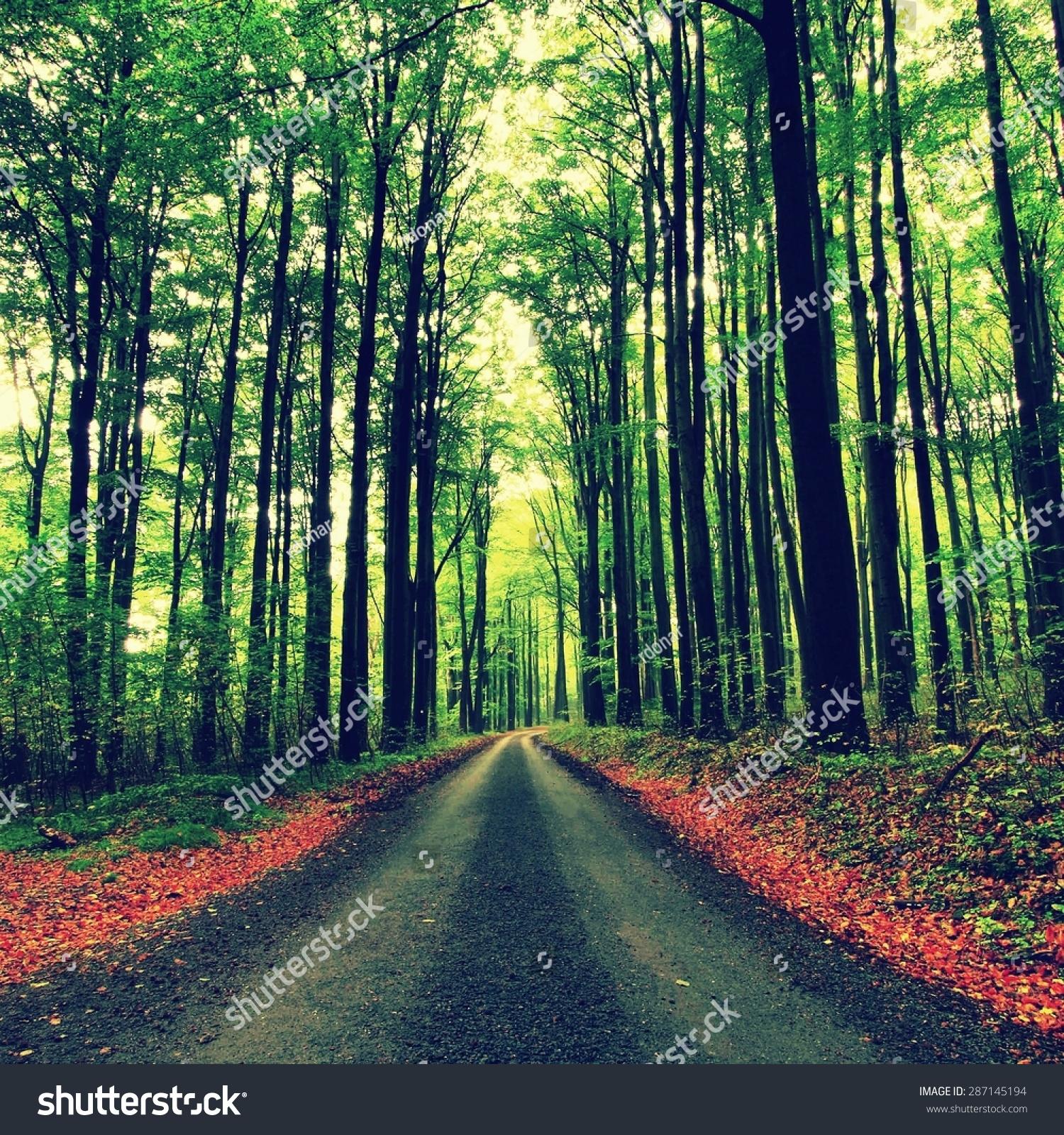 雨季后的春天下午在森林里