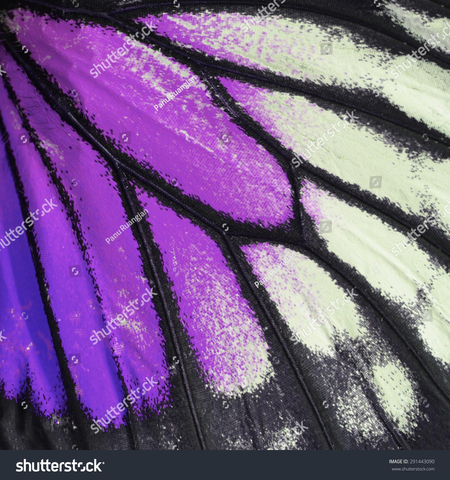 自然纹理,来自紫色蝴蝶翅膀的背景-动物/野生生物
