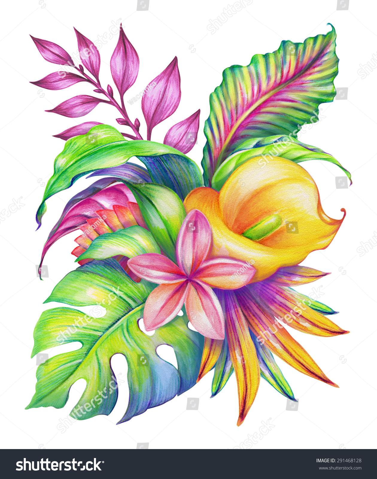 热带花卉安排,外来植物的气味,水彩插图孤立在白色背景