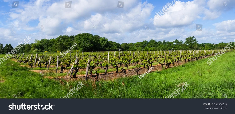 法国葡萄园在农村的愤怒