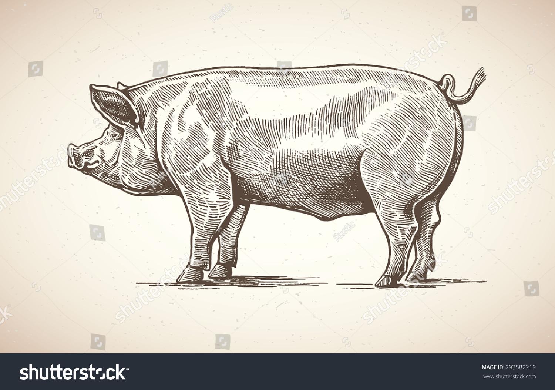 动物信封的折法步骤图