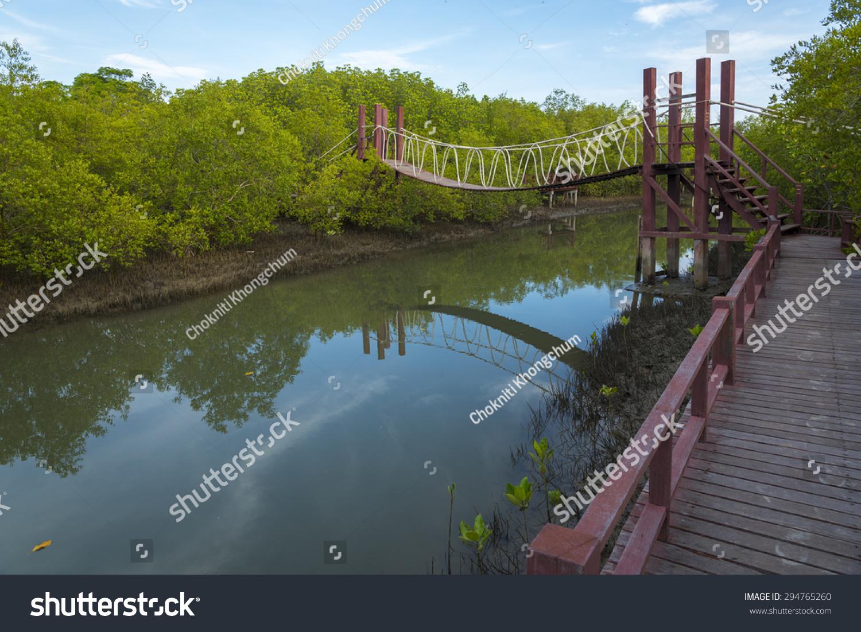 森林在petchaburi红树林