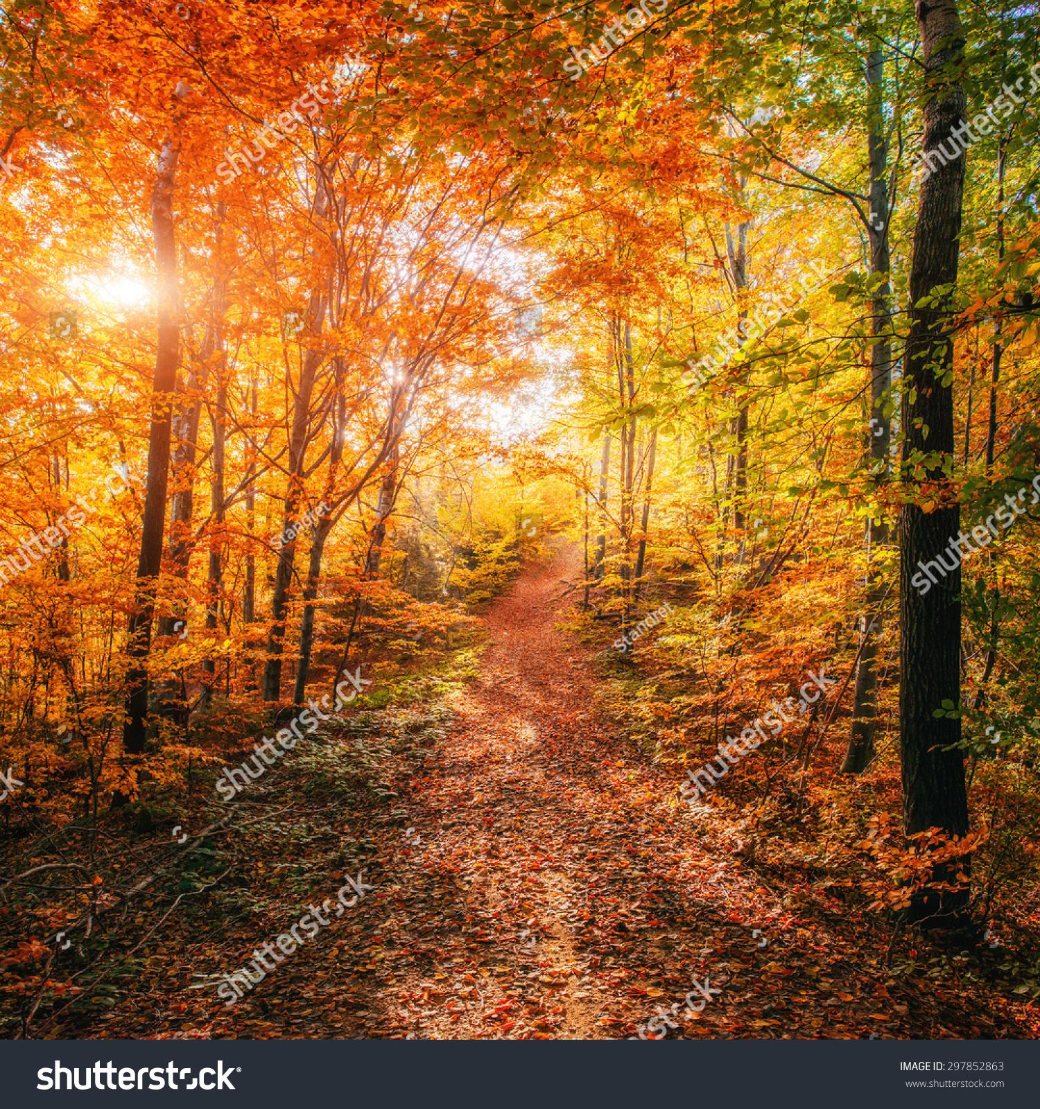 秋天的森林之路.秋季景观.-自然-海洛创意(hellorf)-.图片