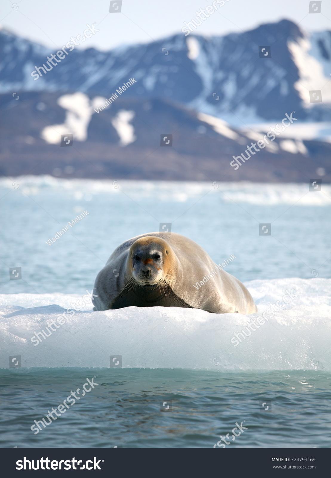 壁纸 动物 海洋动物 桌面 1109_1600 竖版 竖屏 手机