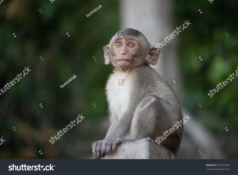 可爱的猴子-动物/野生生物