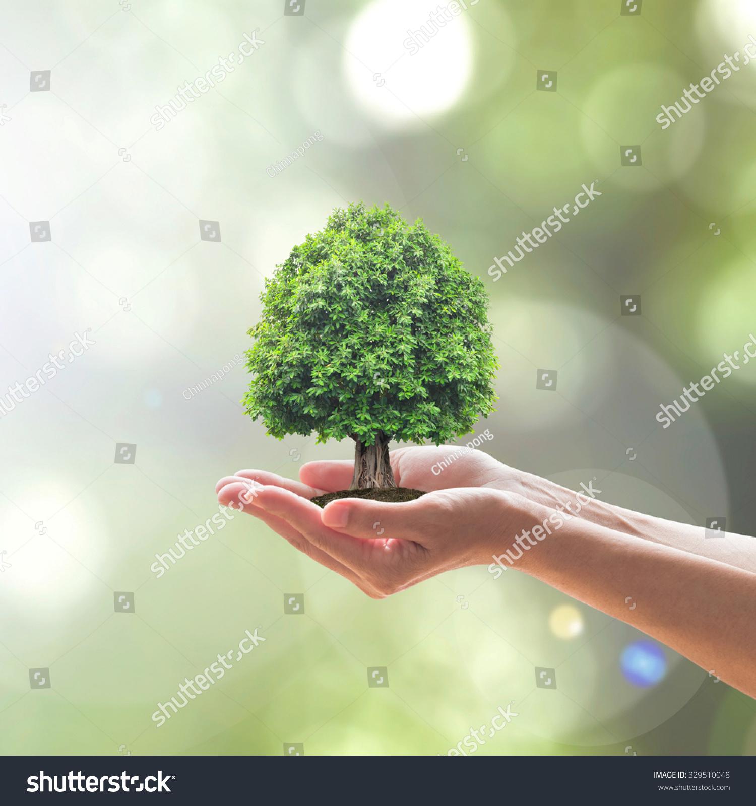 人手拿着完美的成长树植物自然散景背景模糊的绿色植物叶子:植树造林