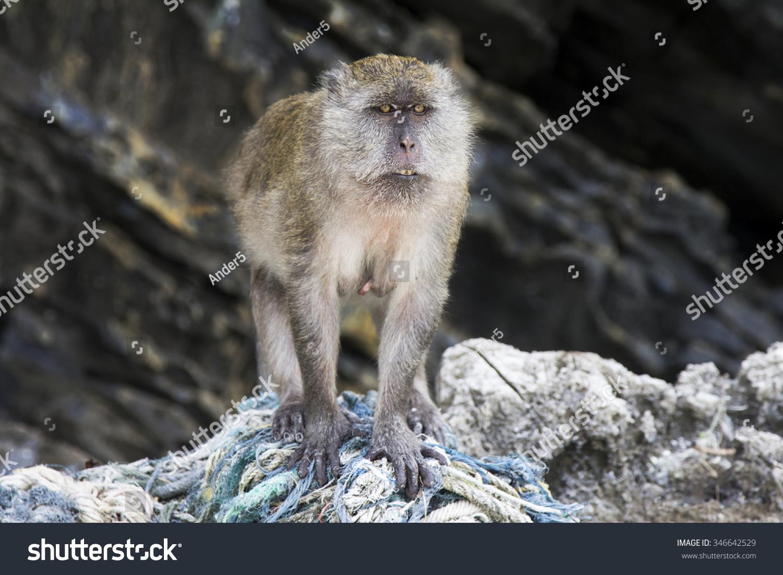 猴子猴子沙滩上冷却-动物/野生生物