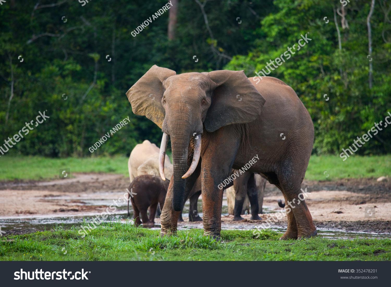 大象 动物 1500_1101