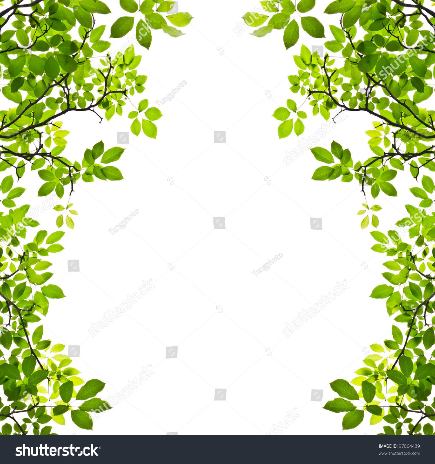 绿叶孤立在白色背景-自然,抽象-海洛创意(hellorf)--.