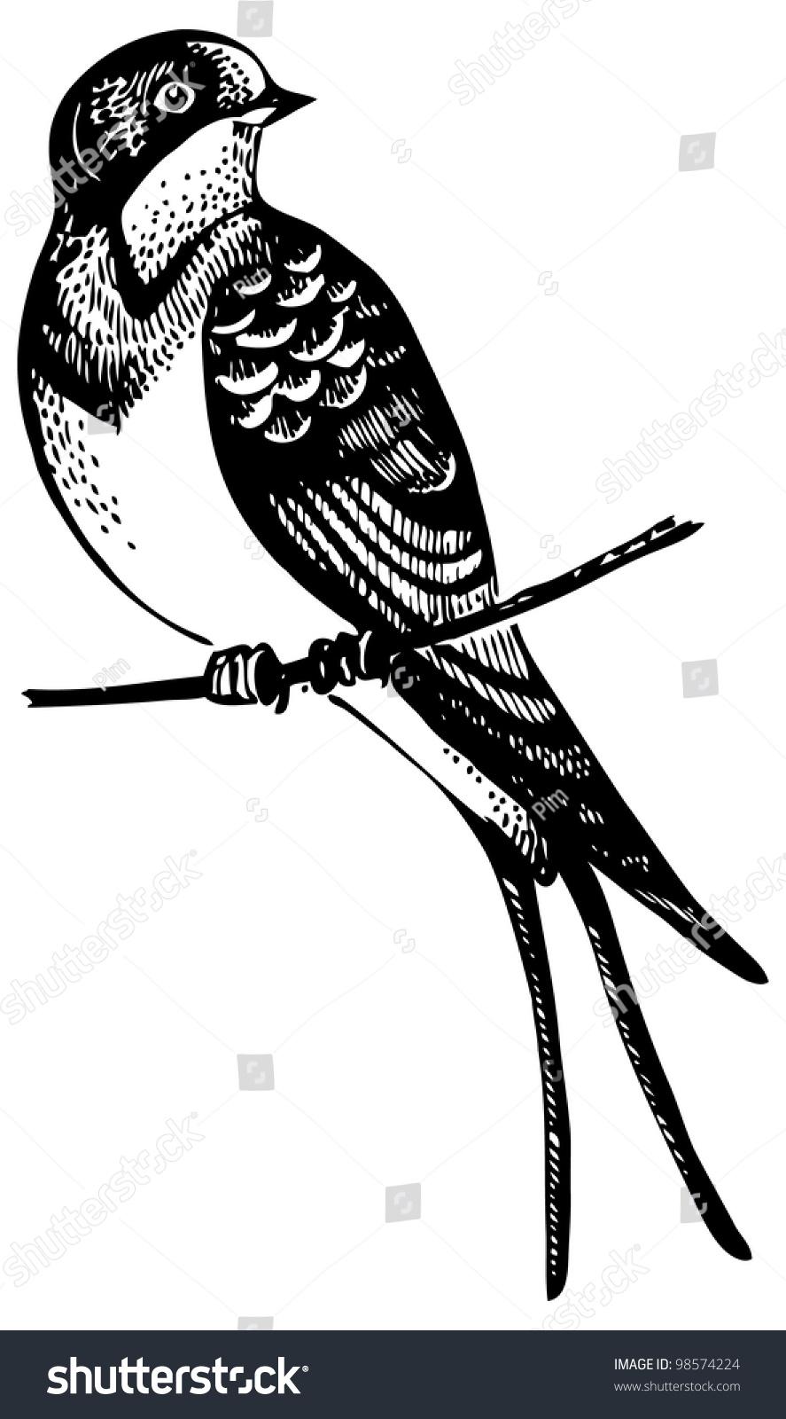 燕子鸟,手绘插图-动物/野生生物,自然-海洛创意()-合.